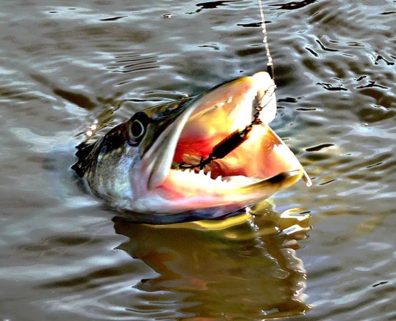 рыбалка ловим щуку на блесну
