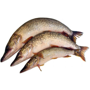 ryba-shhuka