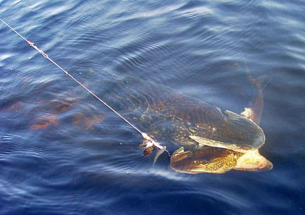 дзержинск где клюет рыба