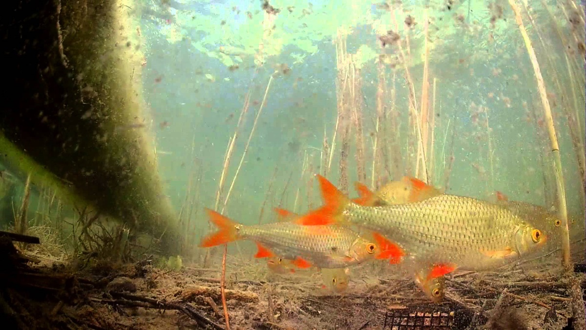 активатор клева fishhungry официальный сайт