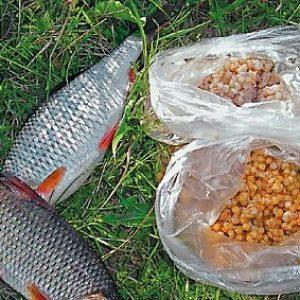 пшеница для ловли рыбы