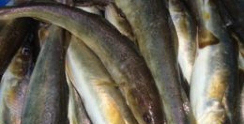 Рыбалка в Приморском крае