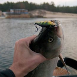 Рыбалка в Луганской области