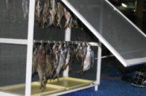 Сушилки для рыбы своими руками