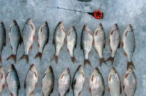 Снасти для зимней ловли плотвы