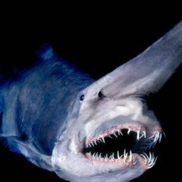 Топ-10 самых редких рыб в мире