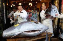 Топ-10 самой дорогой в мире рыбы