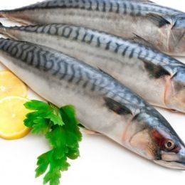 Макрель — морская рыба