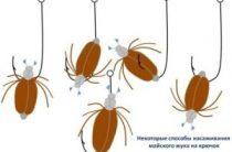 Правильно насаживаем майского жука