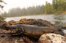 Рыбалка в Мурманской области