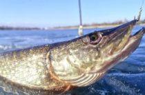 Рыбалка в Новгородской области