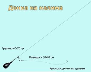donka_na_nalima