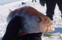Рыбалка в Курганской области