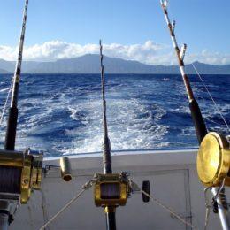 Как ловить рыбу с помощью троллинга?
