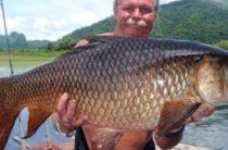 Топ-10 самых больших пресноводных рыб