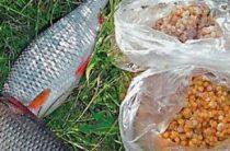 Подготовка пшеницы для рыбалки